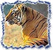 Tigerpark - Pench